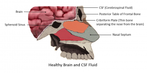 Healthy Brain and CSF